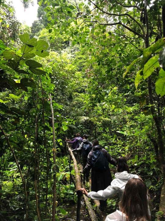 Group hiking through a rainforest on a wildlife tour