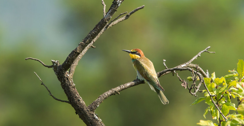 A bird sitting on a branch, as can be seen on bird-watching wildlife tours in Romania