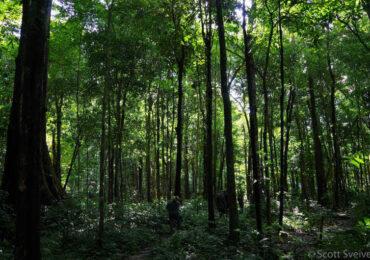 A group on an eco Trekking tour through the Amazon Rainforest