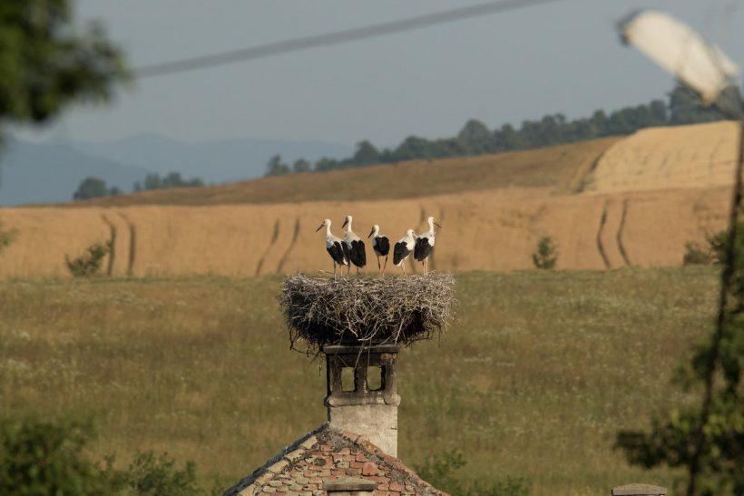 Storks-Nest-Transylvania